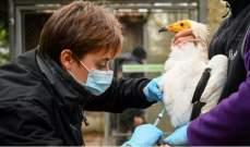 صورة الزراعة الفرنسية: فيروس أنفلونزا الطيور بالبلاد تحت السيطرة ولا ينتقل للإنسان