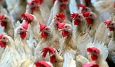 """صورة سلطات روسيا أعلنت رصد أول إصابة بشرية بانفلونزا الطيور """"إتش5إن8"""""""