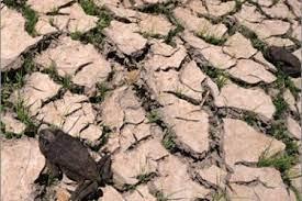 صورة تحذير أمميّ من الجفاف كوباء عالميّ
